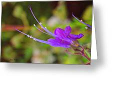A Bit Of Purple Greeting Card by Judy  Waller