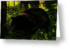 A Black Bear Greeting Card