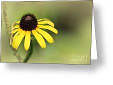 A Black Eyed Susan Greeting Card