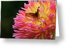 A Blazing Harmony Greeting Card