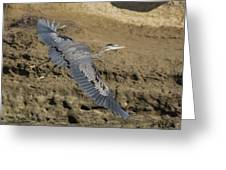 A Blue Heron Flying Greeting Card
