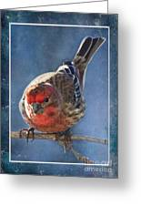 A Blue Morning Housefinch Greeting Card