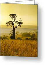 A Boab Sunrise Greeting Card