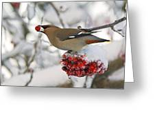 A Bohemian Waxwing Feeding On Mountain Greeting Card