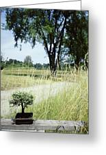 A Bonsai Tree In A Hayfield Greeting Card
