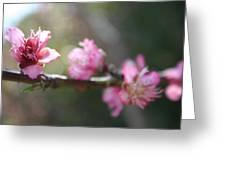 A Bough Of Blurred Peach Blossom Greeting Card