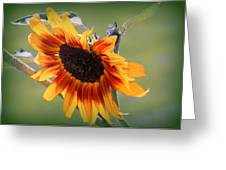 A Bow To Mother Nature Greeting Card