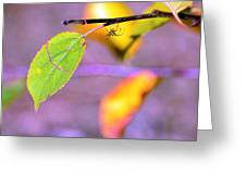 A Branch With Leaves Greeting Card