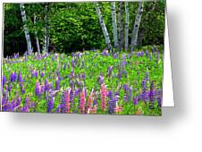 A Breathless Moment Among Lupine Greeting Card