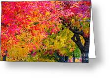 Autumn In Yountville, California Greeting Card