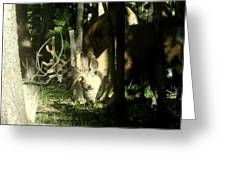 A Buck Deer Grazes Greeting Card