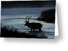 A Bull Elk Crosses The Madison In The Early Morning  Greeting Card