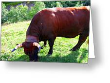 A Bull  Grazing On The Meadow Greeting Card