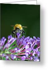 A Bumblebee On Lilac Greeting Card