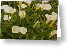 A Bunch Of Easter Sunday Easter Lillies Greeting Card