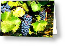 A Bunch Of Grapes Greeting Card by Kay Gilley