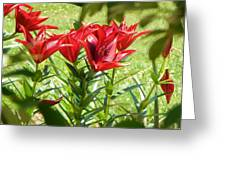 A Burst Of Red Greeting Card