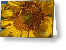 A Burst Of Sun Greeting Card