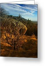A Cactus In The Sandia Mountains Greeting Card