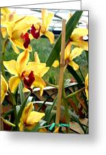 A Cage Of Canary Cymbidiums Greeting Card