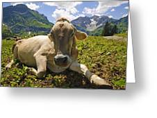 A Calf In The Mountains Greeting Card