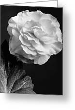 A Camellia Flower Greeting Card