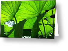 A Canopy Of Lotus Leaves Greeting Card