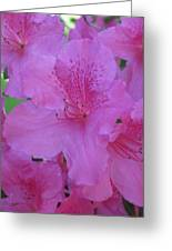A Cape Town Flower II Greeting Card