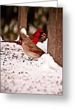 A Cardinal Couple Greeting Card