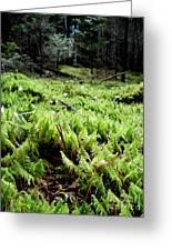 A Carpet Of Moss  Greeting Card by Steven Valkenberg