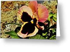 A Charming Pansy Greeting Card