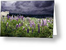 A Childs Dream Among Lupine Greeting Card