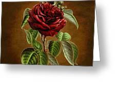 A Chocolate Beauty Greeting Card