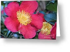 A Christmas Blossom Greeting Card