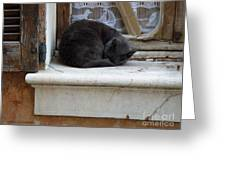 A Circled Up Cat  Greeting Card by Lainie Wrightson