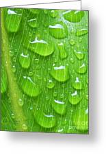 A Cleansing Morning Rain Greeting Card