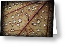 A Close Up Of A Wet Leaf Greeting Card