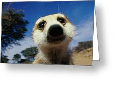 A Close View Of A Meerkats Face Greeting Card