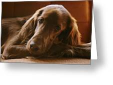 A Close View Of An Irish Setter Greeting Card