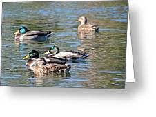 A Cluster Duck Greeting Card