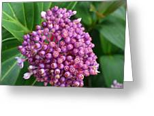 A Cluster Of Purple Greeting Card