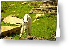 A Goat Coming Down The Trail Greeting Card