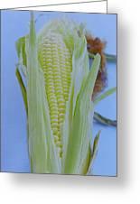 A Cob Of Corn Greeting Card