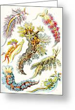 A Collection Of Nudibranchia Greeting Card