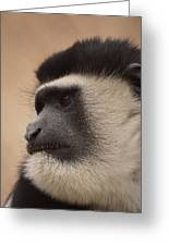 A Colobus Monkey Greeting Card
