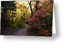 A Colorful Path  Greeting Card