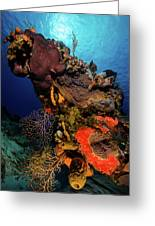 A Colorful Reef Scene With Sunburst Greeting Card