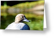 A Common Goldeneye Portrait Greeting Card