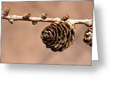 A Conifer Cone On A Tree Branch Greeting Card