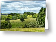 A Copse Of Trees Greeting Card